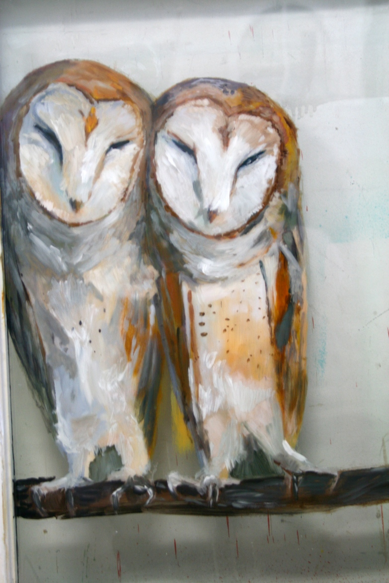 Snuggling Barn Owls